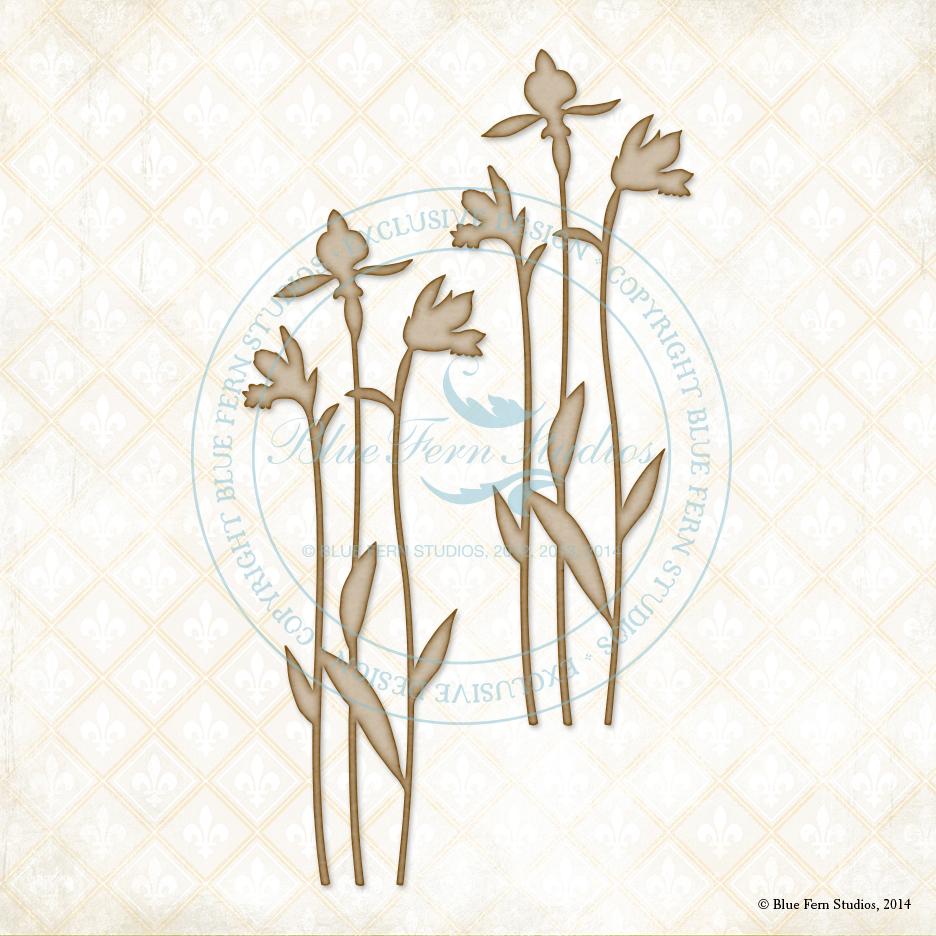 Spring Iris - Large