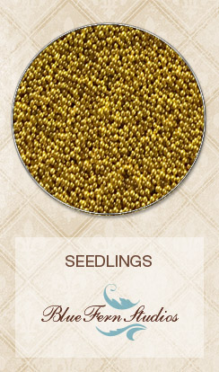 Seedlings - Mustard